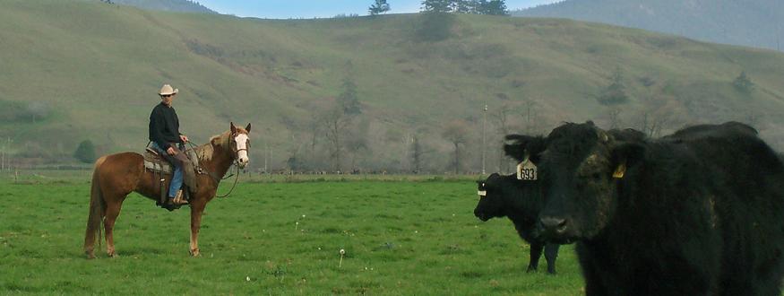 Humboldt Grassfed Beaf